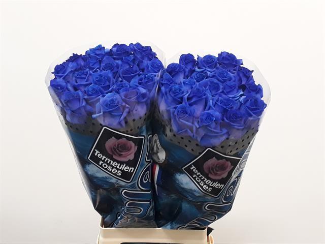 Rose Blu A1 Da 80 Cm